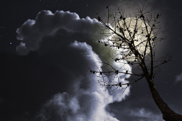 Dead naked tree in a cloudy full moon night