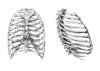 Hand drawn medical illustration drawing with imitation of lithography: Thorax bones (2 angles)