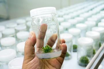 Experiment plant tissue culture in laboratory, Selective focus.