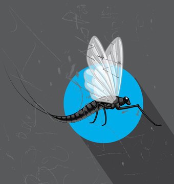 Flying Mayfly Insect