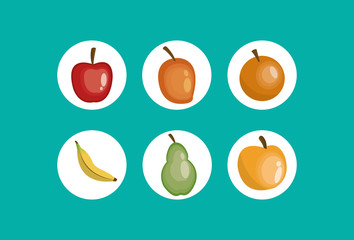 assorted healthy food icons image vector illustration design