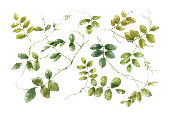 watercolor painting of leaves on white background