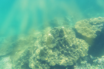 abstract coral and underwater view on sun light