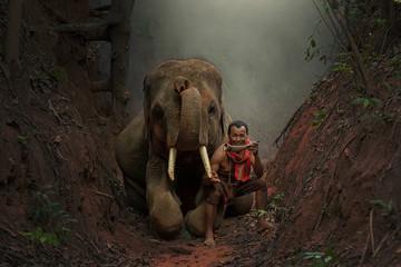 Elephants and elephant mahout.
