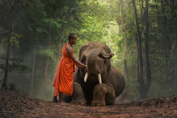 Monk with  elephants .