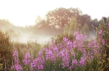 wild flower in fog on sunset