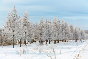 scenic winter landscape