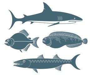 Predator  Fish
