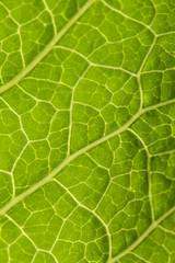 A Close up of leaf taken under bright sun.
