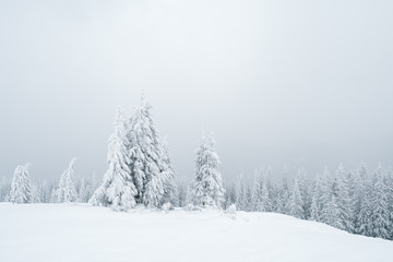 Fototapete - Grey winter landscape in the forest