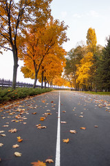 empty road and colorful yellow, green and red trees in autumn park