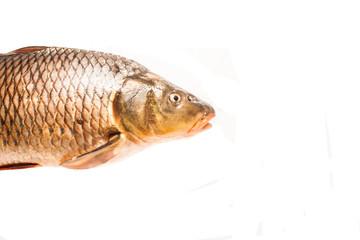 fresh fish, river carp