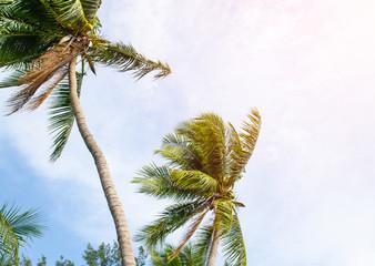 Sun over green palm leaves , vintage filter , instragram color