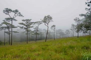 Hiking adventures in the rainy season.