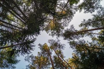 Baumkronen im Herbst