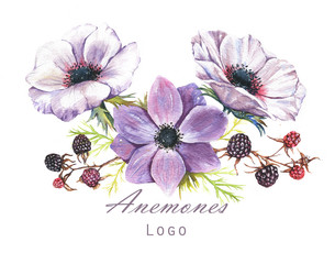 Hand-drawn watercolor illustration of the floral bouquet. Tender spring drawing of violet and white anemones flowers and blackberry in the composition. Floral logo template