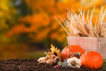 Autumn still life with pumpkins and autumn flower on nature background