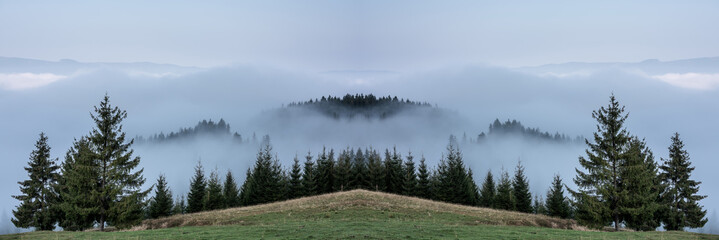Foggy Landscape. Mountain ridge with clouds flowing through the pine trees.
