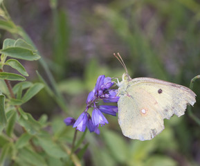 white butterfly on a blue flower