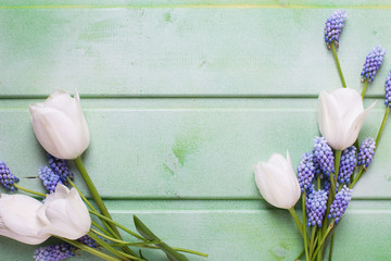 White tulips  and blue muscaries  flowers on  green wooden backg