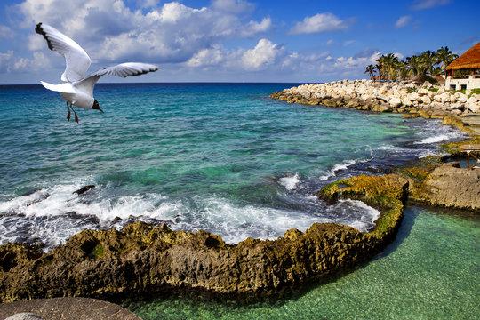 seagull over the sea in park near Cozumel, Mexico