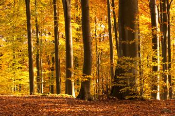 Autumn Forest./ Pomerania, Poland