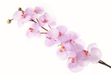Pink cherry blossom branch