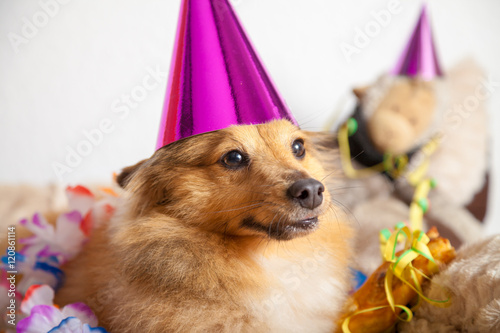 Hund Feiert Geburtstag Stock Photo And Royalty Free Images On