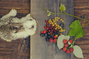 rabbit or hare with wild berries