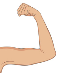Female well toned biceps. Bent arm showing progress after fitnes