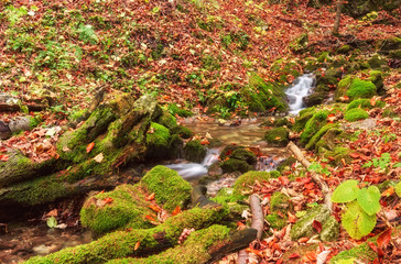 Wild forest with stream, Zejmarska roklina, National park Slovak paradise, Slovakia