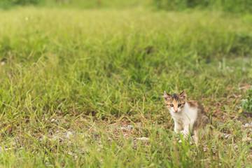 cat in grassland