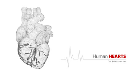Anatomy of Human Heart on a white background