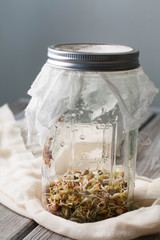 Sprouting beans in a glass jar covered with cheesecloth