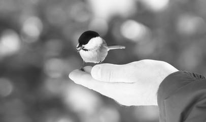 Piccolo uccello selvatico mangia appoggiato sulla mano di un uomo