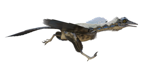 3D rendering of Archaeopteryx running, isolated on white background. Wall mural