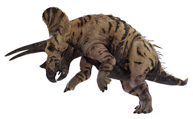 3D rendering of Triceratops ramming, isolated on white background.