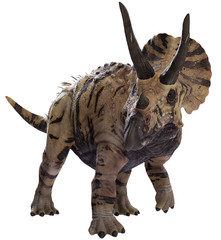 3D rendering of Triceratops walking, isolated on white background.