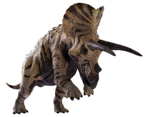 3D rendering of Triceratops charging, isolated on white background.