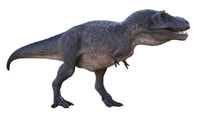3D rendering of Tyrannosaurus Rex looking for a meal, isolated on a white background.