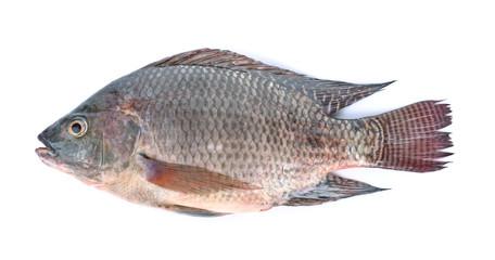 fish,Oreochromis nilotica  isolated on white background