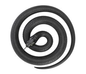 Twisted Black Snake on White Background. 3D illustration