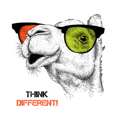 Portrait of the camel in the colored glasses. Think different. Vector illustration.