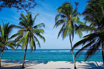 Beach with palms in Kenya, Tiwi beach