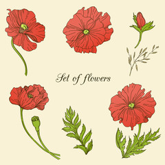 Set of flowers. The EPS 10 format. Illustration includes flowers of poppis