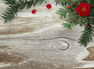 Natural rustic fall or winter background with branch of yew tree, red roses and old wooden board. Decorative winter frame or border with green needles and red flowers on a wood background. Top view.