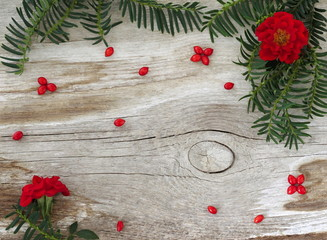Decorative rustic autumn or winter background with branch of green needles, red rose flowers  and natural ornaments from berries on a wooden board. Natural winter decoration. Top view.