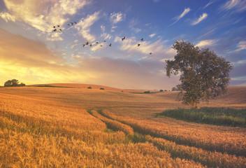 rural landscape, color retro, vintage