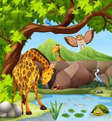 Wild animals by the pond