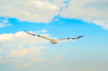 Seagull in the blue sky.
